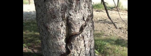 Jim Funcannon finds a snake